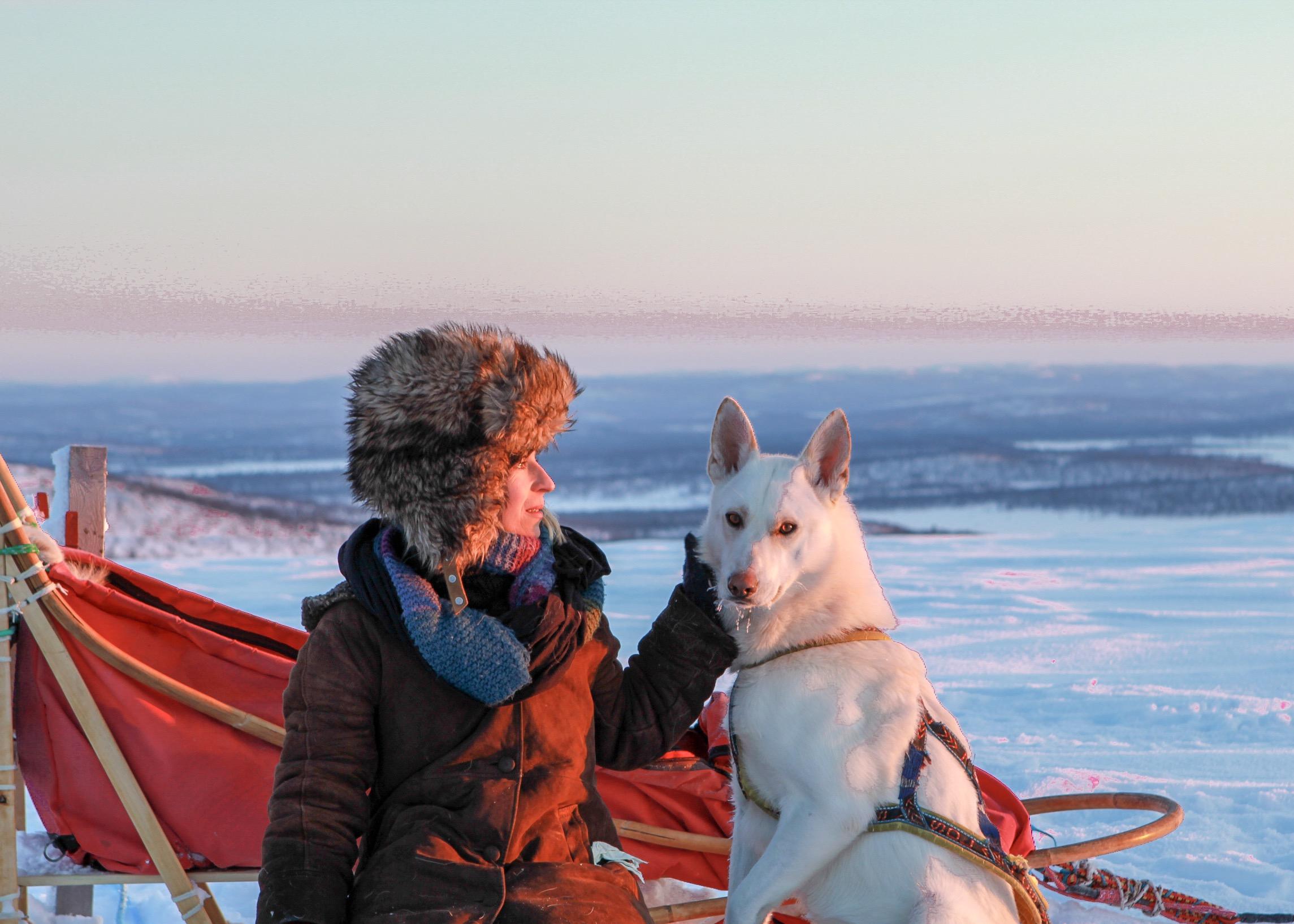 Inari husky