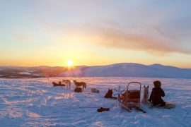 Koiravaljakkoajelu auringonlaskussa Lapissa.
