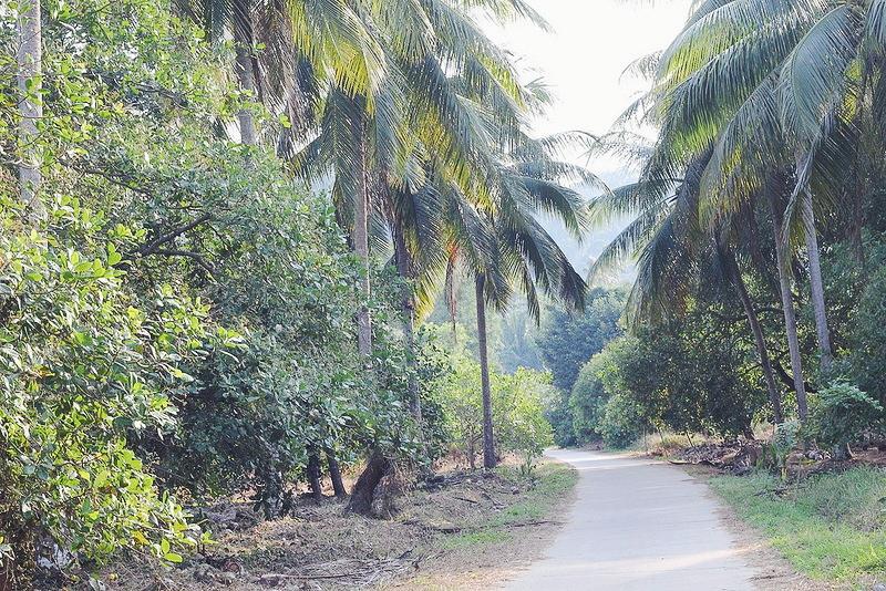 thaimaa saari